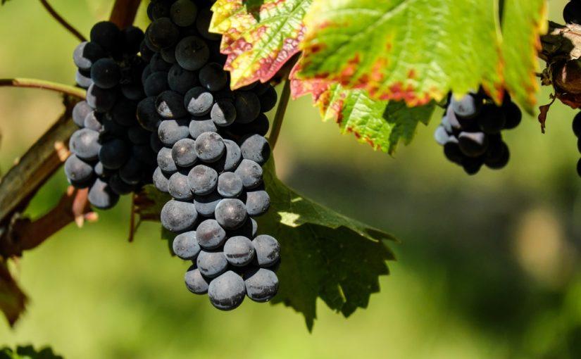 Oenotourisme : incontournable en France, le pays du vin !