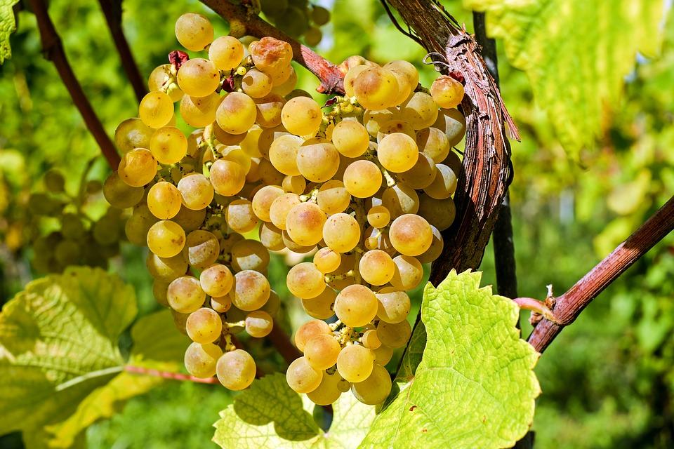 viticole biodynamique